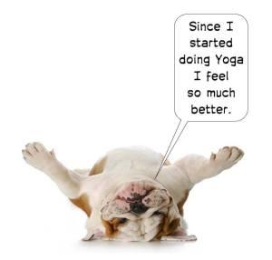 150105 better bulldog