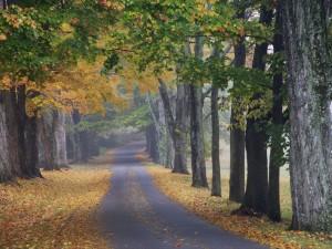 1502 journey-into-fall-louisville-kentucky1