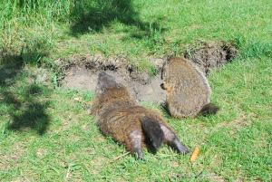 150202 Upward Groundhog